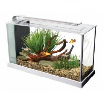 Fluval Spec Aquarium Set White - 19 L (5 US gal) NEW