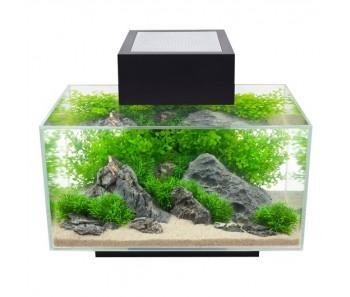 Fluval Edge Aquarium Set - Black - 23 L (6 US gal)